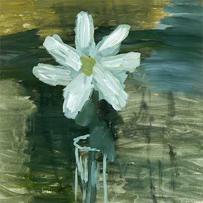 White Flowers in a Glass